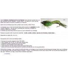 LARVE DE LIBELLULE TISSEE SWIMOLIDAM